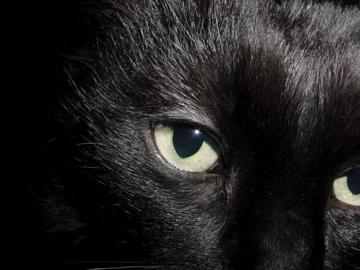 The Dark Cat